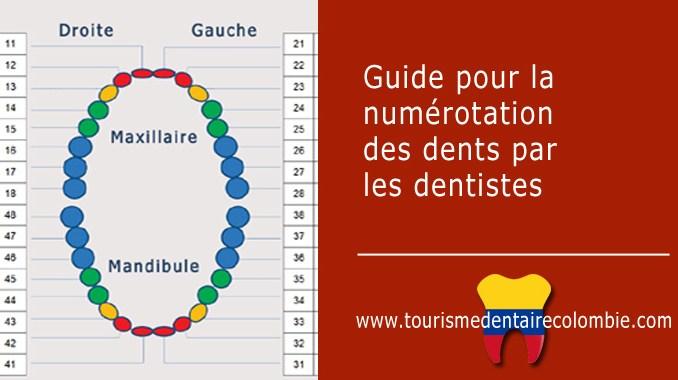 Guide de numéros des dents
