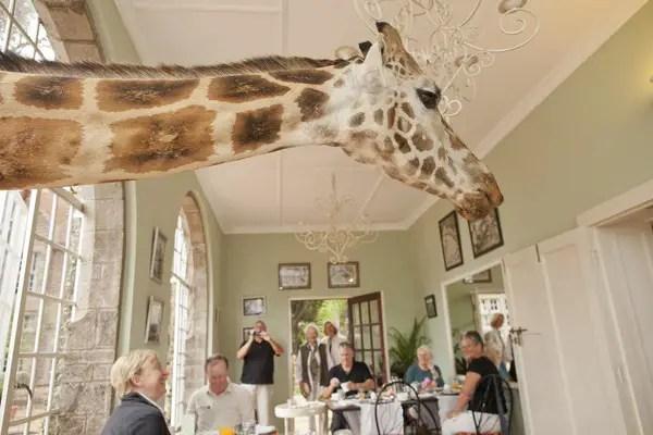Giraffe Manor in Nairobi Kenya interior