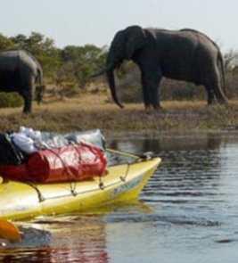 Plea to Stop Mass Hippo Culling in Zambia – Tourism Tattler