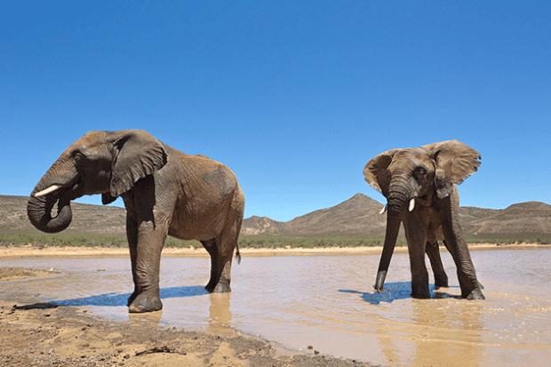 elephant at aquila game reserve