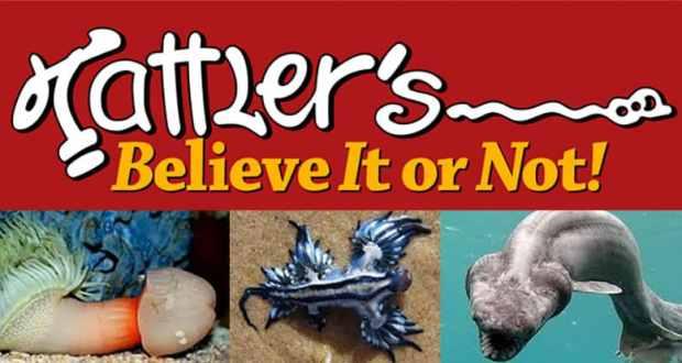 Tattler's Believe It Or Not