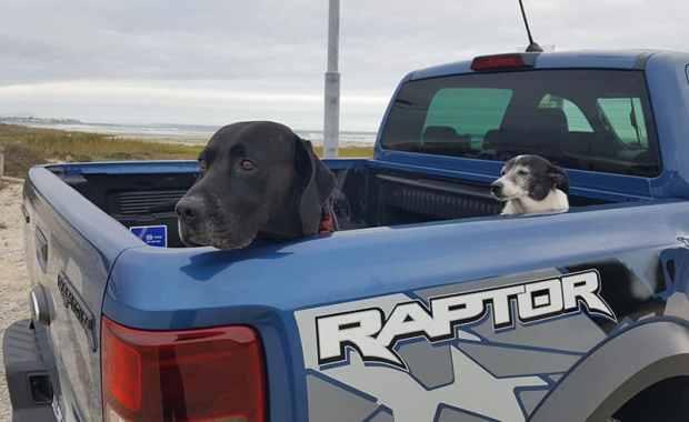 Ford Ranger Raptor dogs in the bin