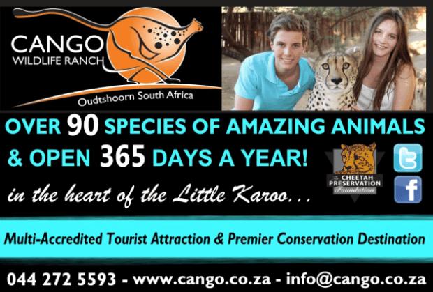 Cango-Wildlife-Ranch-Ad