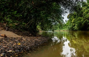 The importance of tourism for the Yasuni Rainforest