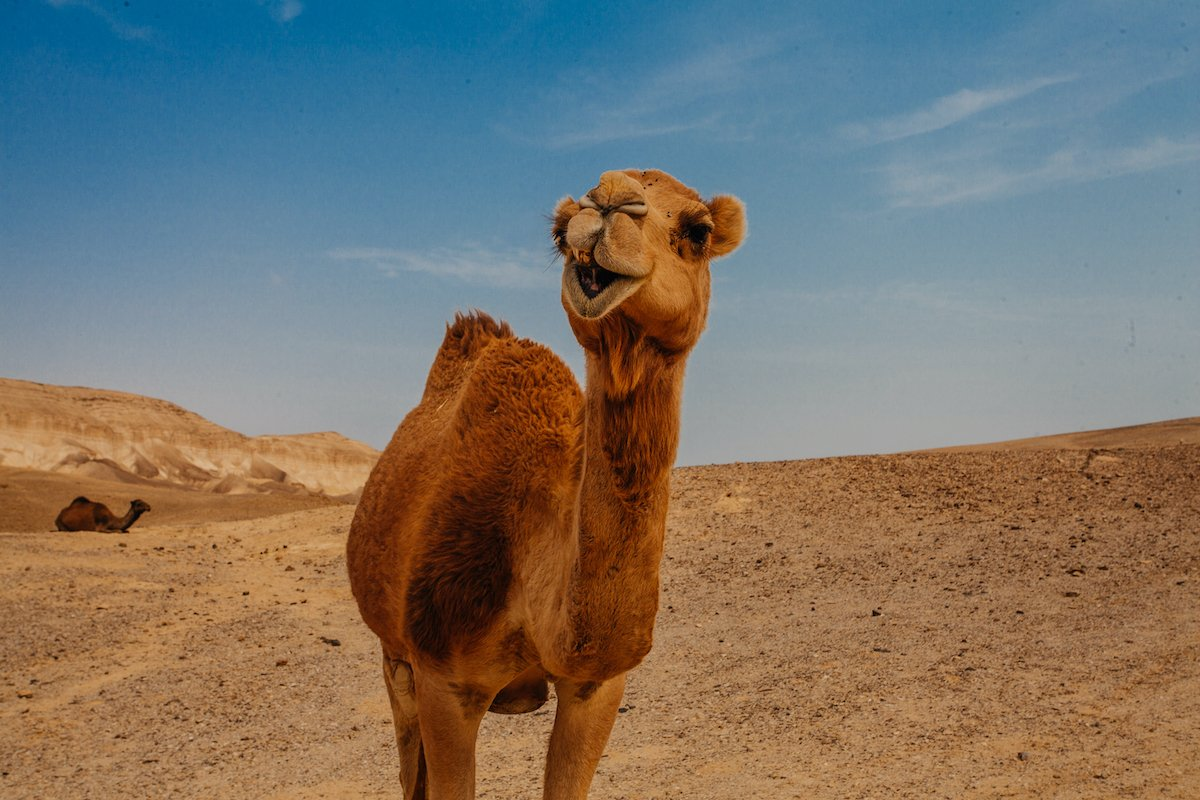 Family Adventure Day In The Negev - 1 Day Recommended Itinerary2