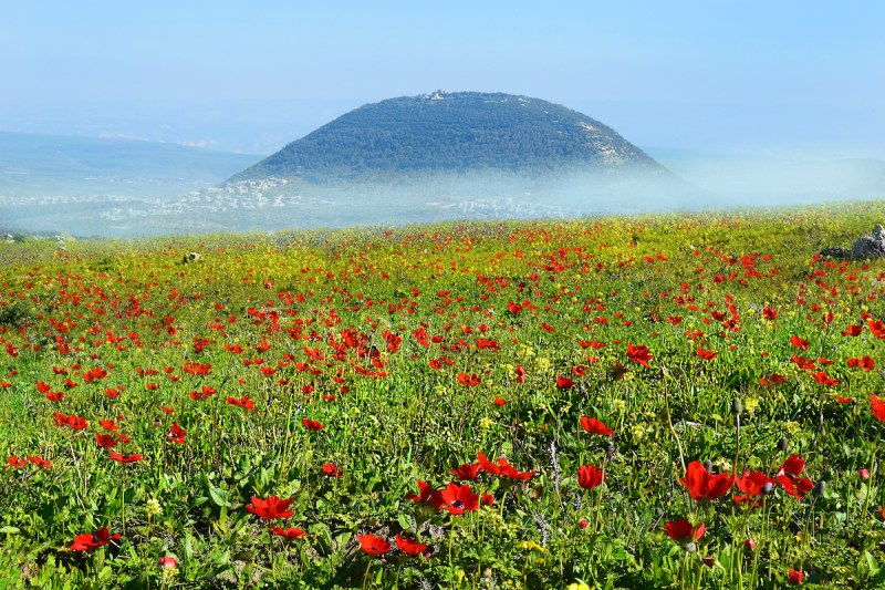 Galilee Shore Excursion Tour From Haifa Port