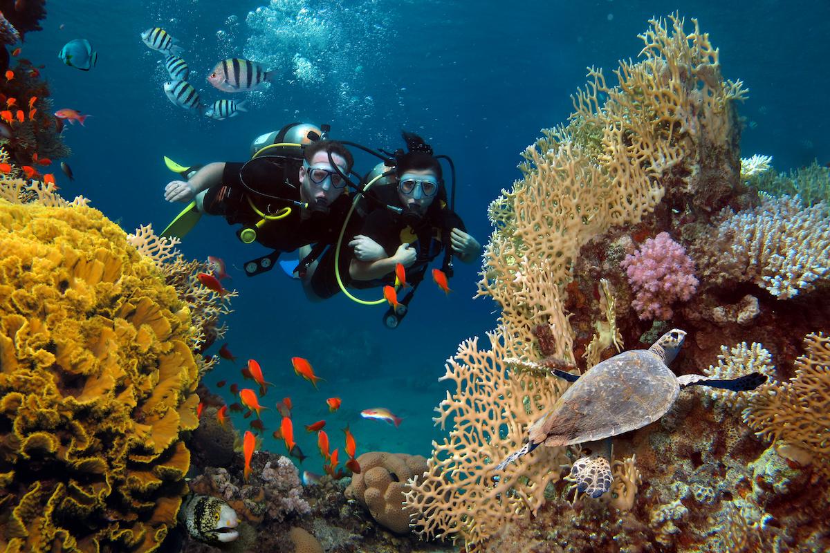 Diving Activities In Eilat