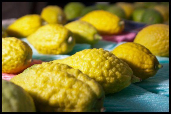The etrog, a symbolic fruit used at Sukkot