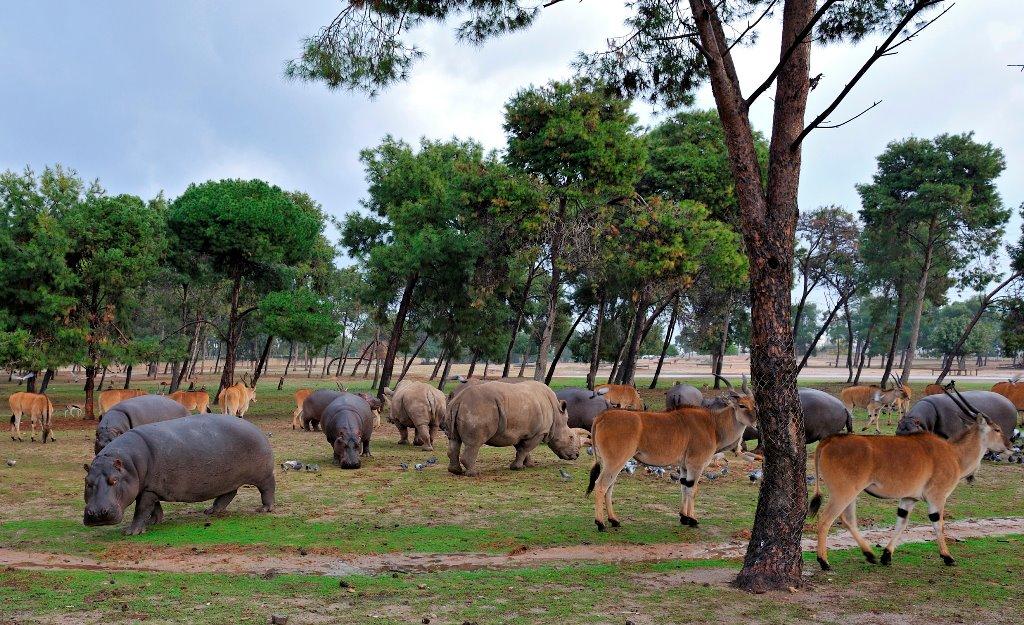 Ramat Gan Safari Park - African Park