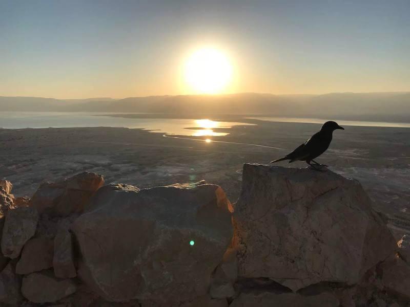 Masada Sunrise Yoga, Ein Gedi Oasis, And Dead Sea Wellness Experience Tour1