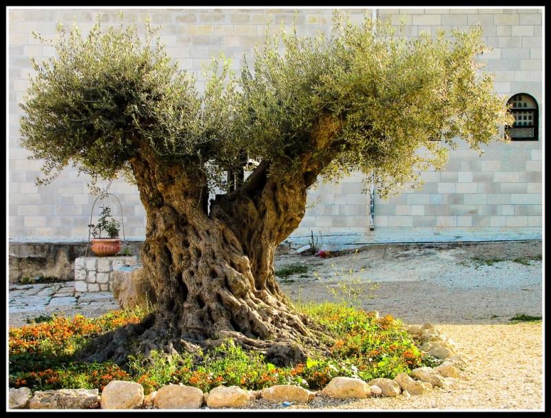 Jerusalembest1 Flavio