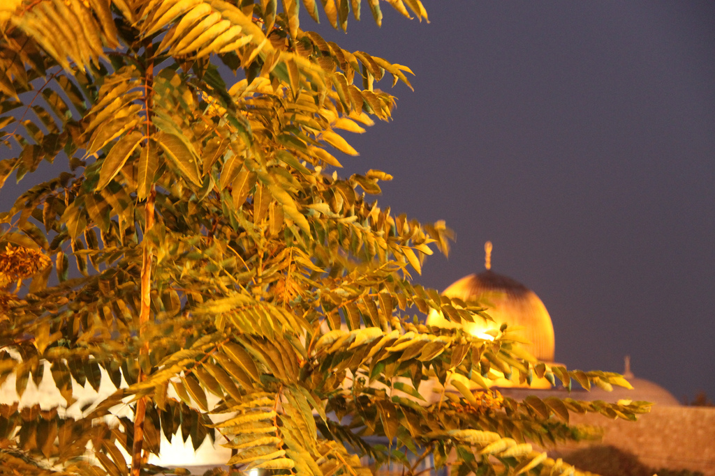 JerusalemBest4 Trilli Bagus