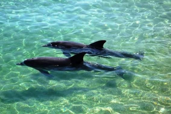 Dolphinreef2 E1450442552291