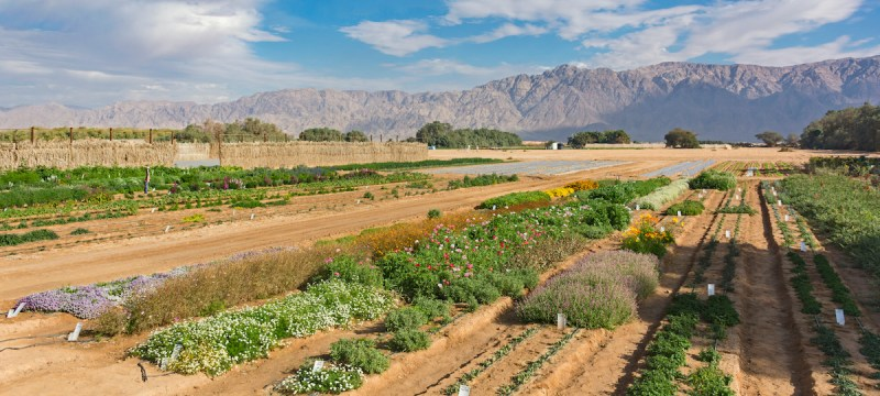 Timna Park And Desert Kibbutz Agriculture Tour From Eilat 5