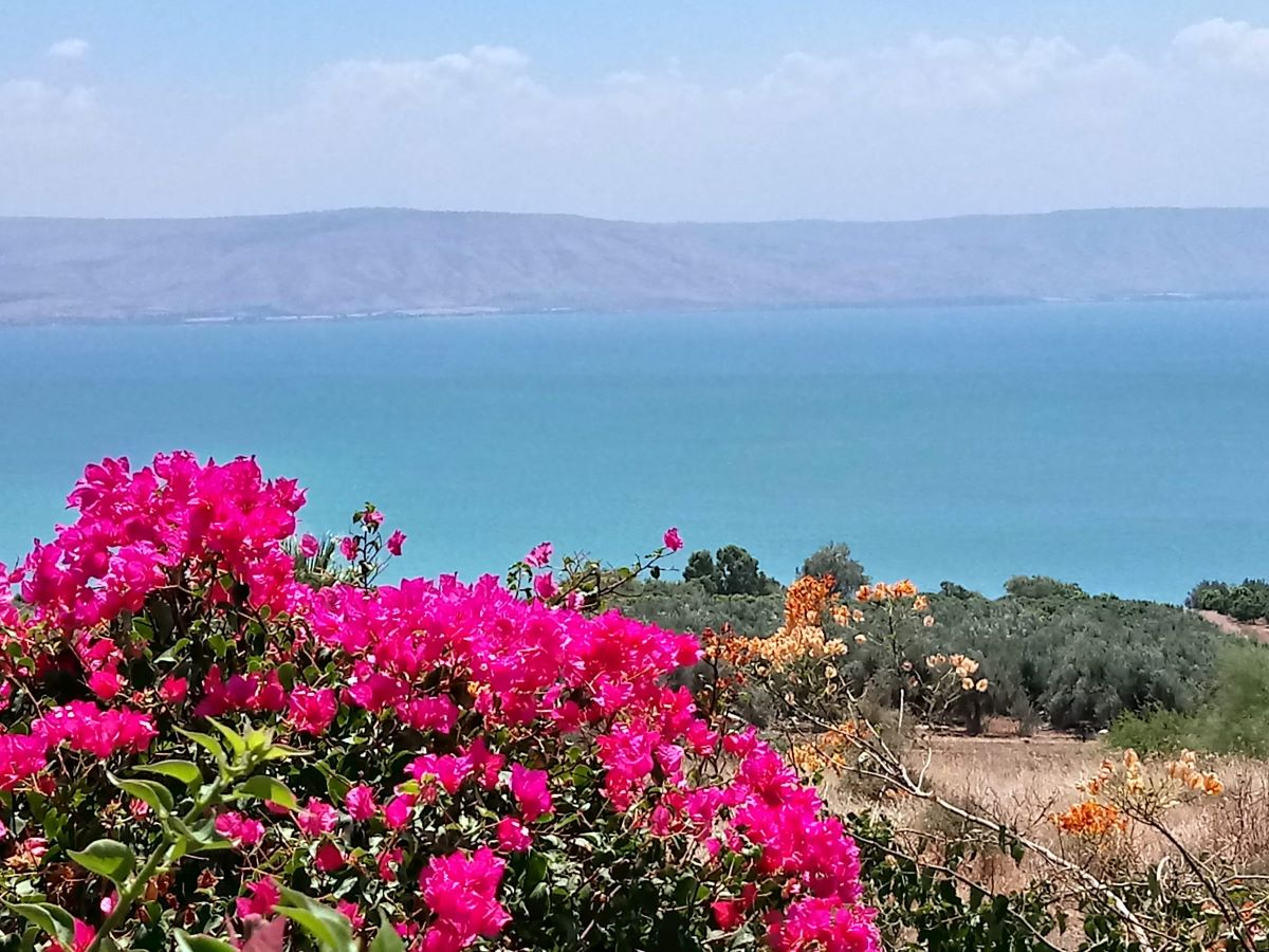 Golan 1 Day