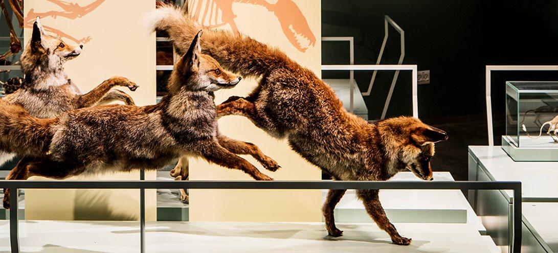 Steinhardt Museum of Natural History in Tel Aviv exhibition