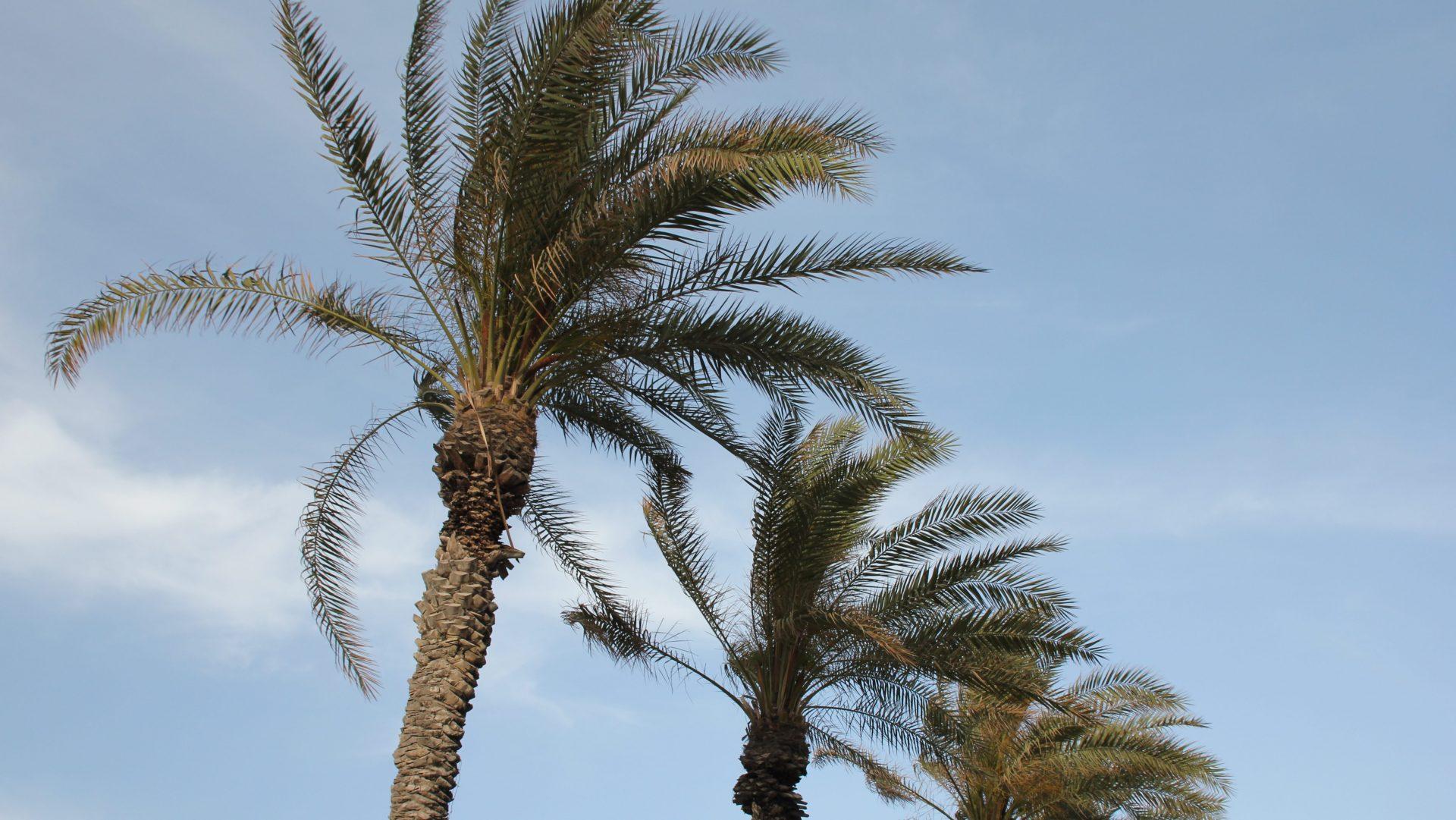 Frishman Beach Tel Aviv