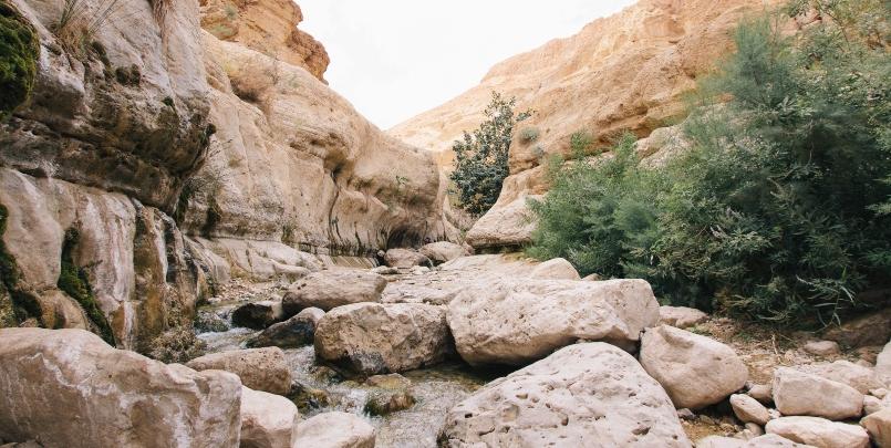 private Masada, Ein Gedi, and Dead Sea Tour