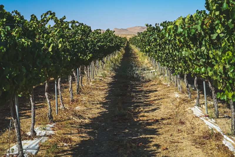 Southern Israel & Negev Food And Wine Private Tour 4