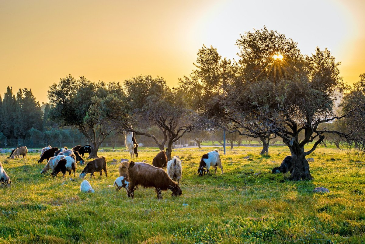 Food & Wine Private Tour In The Jerusalem Hills 2