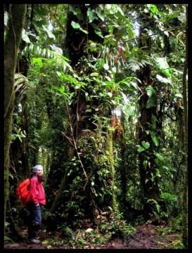 rain forest, forêt des nuages, Costa Rica, nature, faune, flore, plein air,voyage, amerique centrale