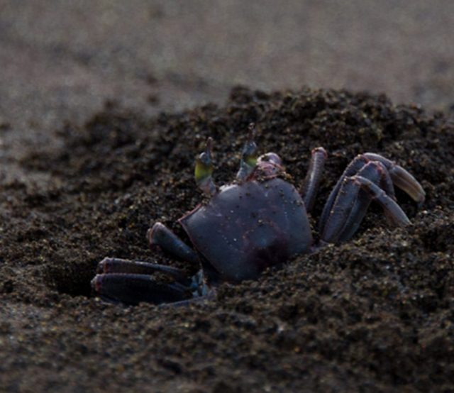 Black sand beach, kauai, Hawaii