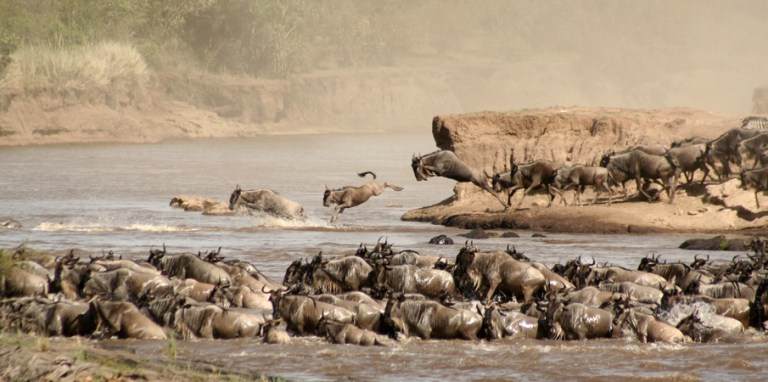 maasai mara safari_ tourite safaris