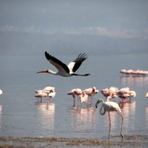 lake nakuru_tourite safaris