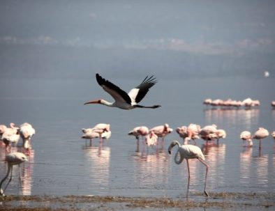 lake nakuru_tourite safaris
