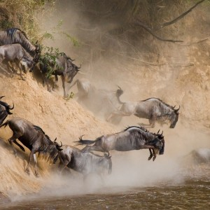 wildebeeste migration_tourite_safaris