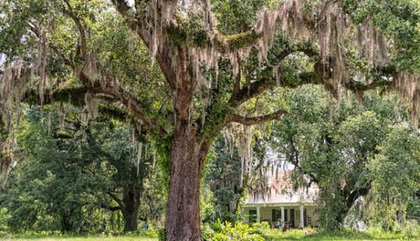 St. Landry Parish   Tour Louisiana