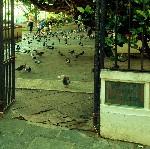 Parque de las Palomas thumb
