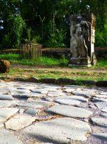 AppiaAtleta