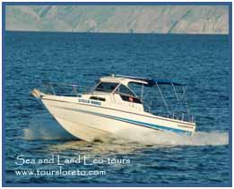 Transportation Loreto BCS Sea and Land Eco-tours