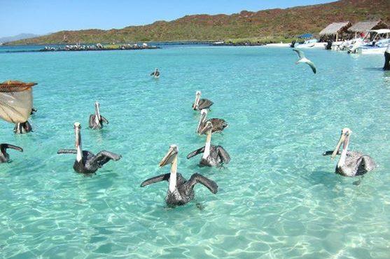 Pelicans visit fishing boat at Coronado Island, Loreto Baja California Sur