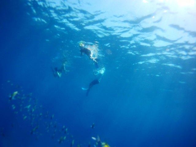 Coronado Island Tour Sea and Land Tours