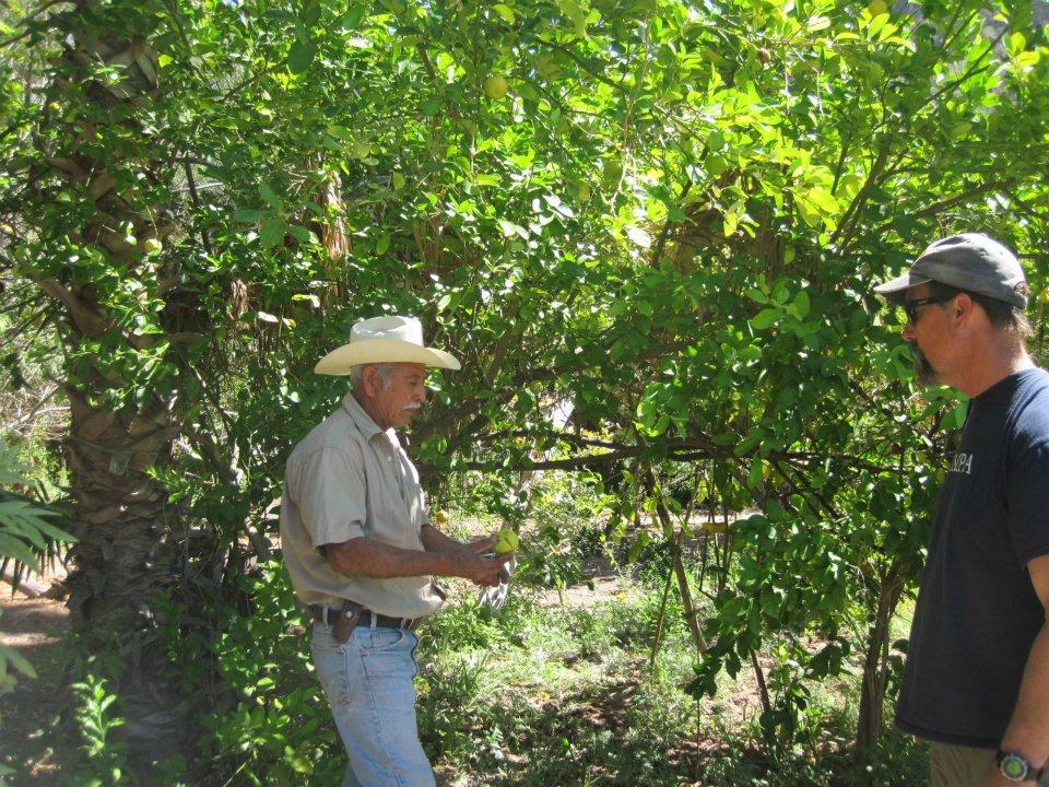 Oasis and Orchards San Javier Tour Loreto Baja