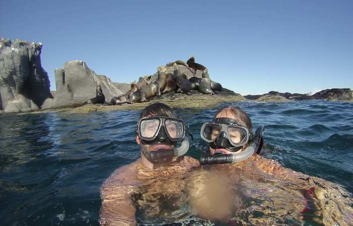 Snorkeling with Sea Lions at Coronado Island, Loreto National Marine Park