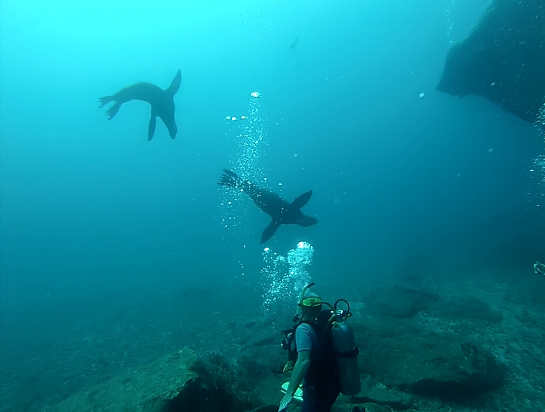 Diving the Sea Lion Colony at Coronado Island