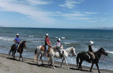 Beach horseback tours Loreto BCS