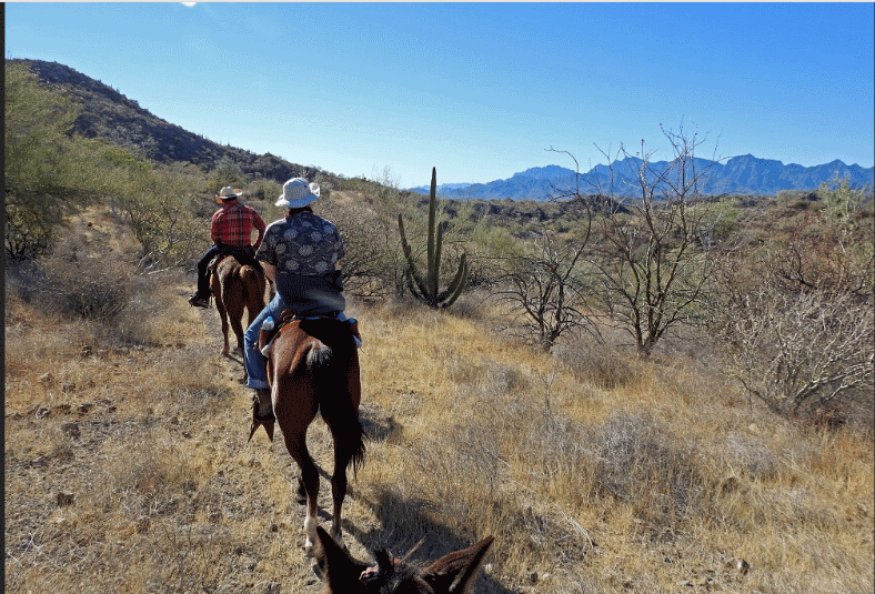 Horse back tours from Loreto BCS