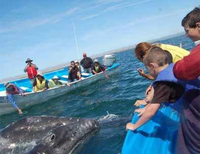 grey-whales-near-boat.jpg