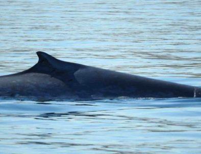 whale-watching-bahia-loreto.jpg