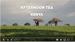 tour a tea plantation in Kenya