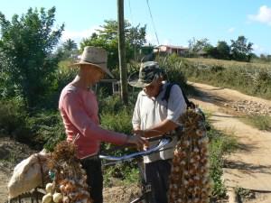 Cuba barter for garlics.