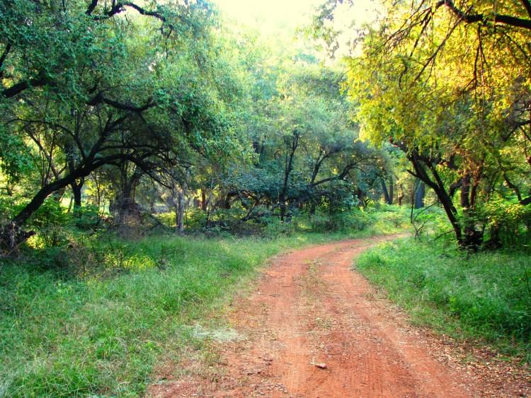 Ranthambore National Park - Roads inside the Park
