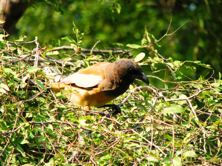 Birds in Ranthambore National Park - Zone 3