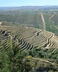 Enoturismo y turismo rural