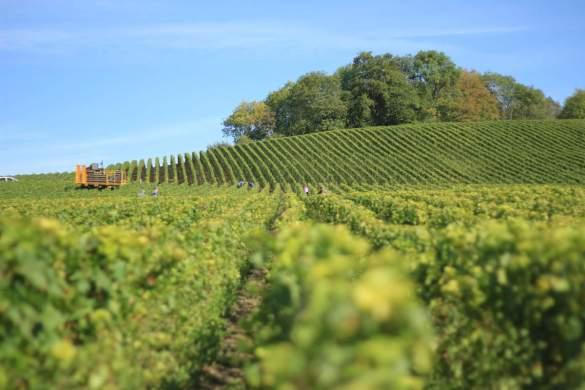el lima y el vino