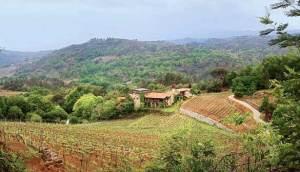 ruta del vino ribeiro